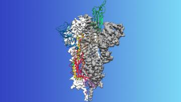 """Φωτογραφία: Δομή σε ατομικό επίπεδο της πρωτεΐνης αιχμής """"spike protein"""" του ιού που προκαλεί τον COVID-19. Εργαστήριο McLellan , Πανεπιστήμιο του Τέξας στο Όστιν."""